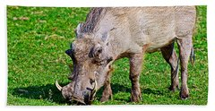 Warthog In Addo Elephant Park Near Port Elizabeth-south Africa  Hand Towel