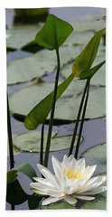 Water Lily In Bloom Hand Towel