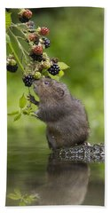 Bath Towel featuring the photograph Water Vole Eating Blackberries Kent Uk by Penny Dixie