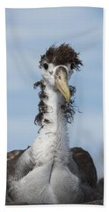 Waved Albatross Molting Juvenile Hand Towel by Pete Oxford