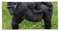 Western Lowland Gorilla 2 Hand Towel