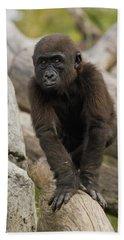 Western Lowland Gorilla Baby Hand Towel by San Diego Zoo