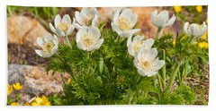 Bath Towel featuring the photograph Western Pasqueflower And Buttercups Blooming In A Meadow by Jeff Goulden