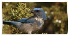 Western Scrub Jay Hand Towel by James Peterson