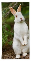 What's Up Doc Hand Towel by Bill Wakeley