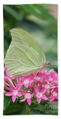 Hand Towel featuring the photograph White Angled Sulphur by Judy Whitton