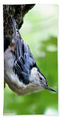 White Breasted Nuthatch Hand Towel by Christina Rollo