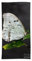 Bath Towel featuring the photograph White Butterfly by Jeremy Hayden