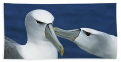 White-capped Albatrosses Courting Hand Towel by Tui De Roy