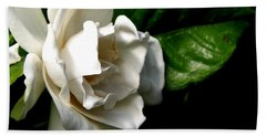 White Gardenia Hand Towel by Rose Santuci-Sofranko