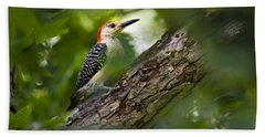 Red Bellied Woodpecker Hand Towel by Christina Rollo