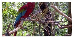 Hand Towel featuring the photograph Wild Hawaiian Parrot  by Joseph Baril