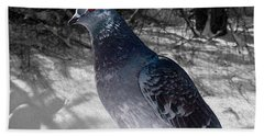 Hand Towel featuring the photograph Winter Pigeon by Nina Silver