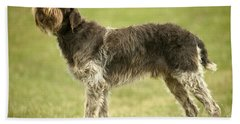 Wirehaired Pointing Griffon Hand Towel