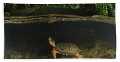 Wood Turtle Swimming North America Hand Towel