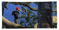 Woody Woodpecker Bath Towel by David Gleeson