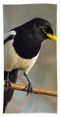 Yellow-billed Magpie Hand Towel by Doug Herr