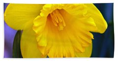 Bath Towel featuring the photograph Yellow Spring Daffodil by Kay Novy