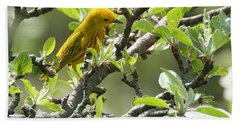 Yellow Warbler In Pear Tree Hand Towel