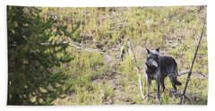 Hand Towel featuring the photograph Yellowstone Wolf by Belinda Greb