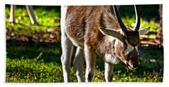 Youngster Addax Bath Towel