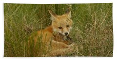 Young Fox Under The Fence Hand Towel