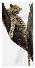 Young Leopard Panthera Pardus In Tree Hand Towel
