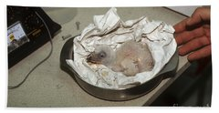 Young Vulture Chick Hatching  Hand Towel