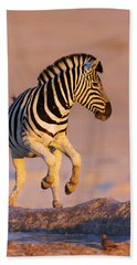 Zebras Jump From Waterhole Hand Towel