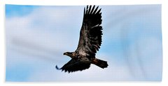 Hand Towel featuring the photograph  Juvenile Bald Eagle by Peggy Franz