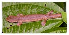 Bolitoglossine Salamander Hand Towel by Dante Fenolio
