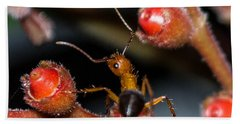 Curious Ant Bath Towel by Shannon Harrington