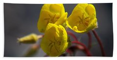 Hand Towel featuring the photograph Desert Evening Primrose by Joe Schofield