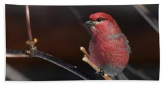 Male Pine Grosbeak Bath Towel