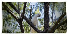 Sulphur Crested Cockatoo Hand Towel by Douglas Barnard
