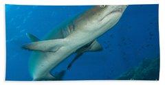 Whitetip Reef Shark, Kimbe Bay, Papua Hand Towel