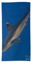 Silvertip Shark, Kimbe Bay, Papua New Hand Towel