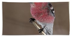 Pine Grosbeak Bath Towel