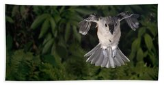 Tufted Titmouse In Flight Hand Towel by Ted Kinsman
