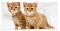 Kittens Hand Towel