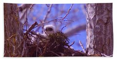 A Baby Red Tail Gazing From Its Nest Hand Towel