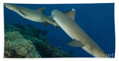 A Pair Of Whitetip Reef Sharks, Kimbe Hand Towel