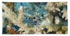 Banded Coral Shrimp Amongst Staghorn Hand Towel