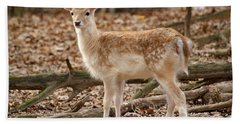 Bath Towel featuring the photograph Beautiful Fawn by Jean Haynes