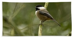 Black-capped Chickadee With Branch Bokeh Bath Towel by Sharon Talson