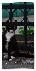Black Cat On Black Background Hand Towel