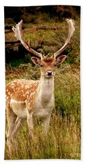 Hand Towel featuring the photograph Wildlife Fallow Deer Stag by Linsey Williams