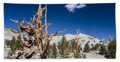 Bristlecone Pine - Pinus Longaeva Bath Towel