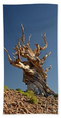 Bristlecone Pine Hand Towel