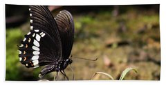 Butterfly Feeding  Hand Towel by Ramabhadran Thirupattur